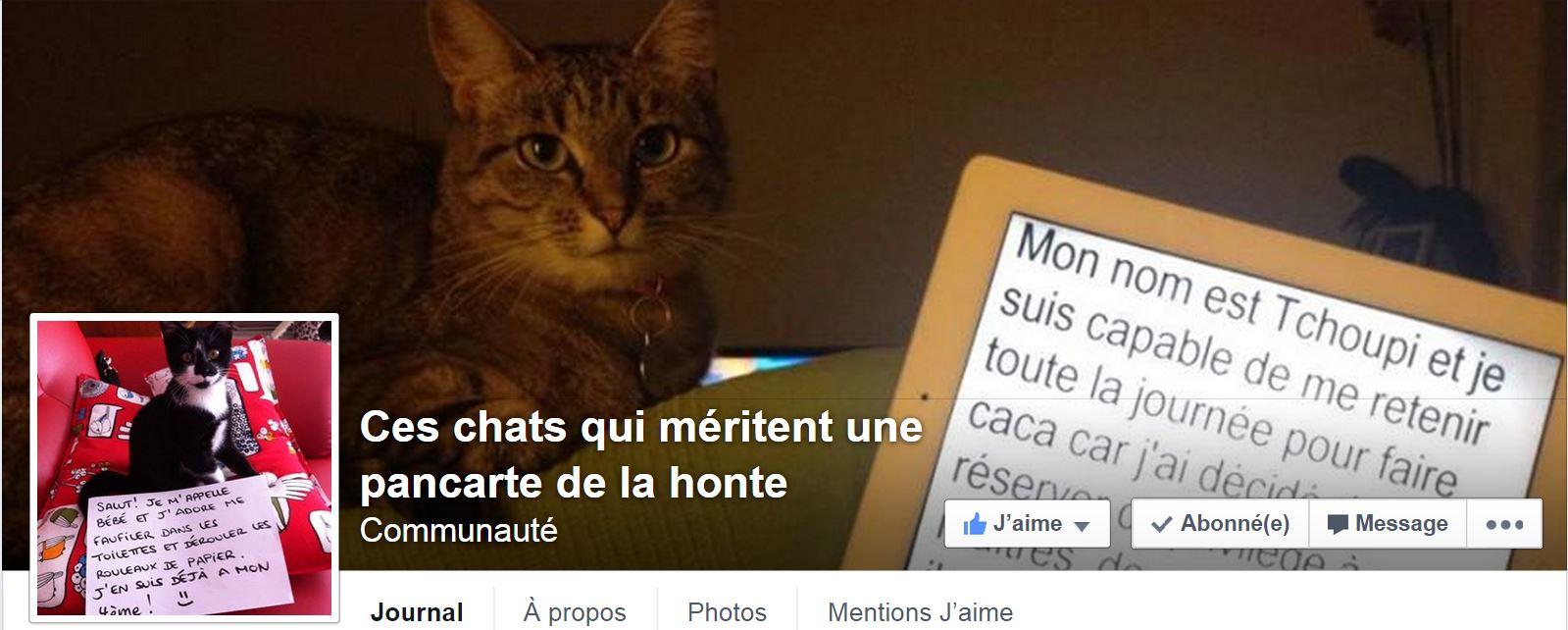Ces chats qui méritent une pancarte de la honte