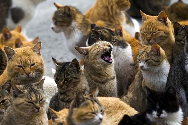 Aoshima l'ile des chats