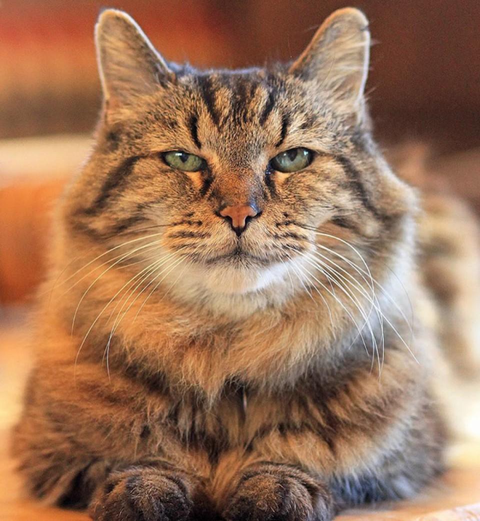chat   ans choisir son site de rencontre