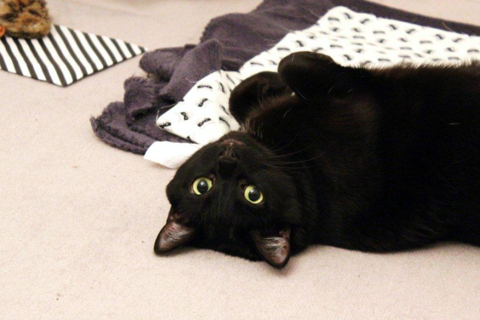 diy couverture pour chat